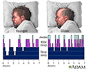 Sleep patterns in the young and aged